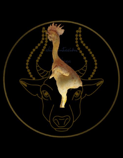 pollo campero alimentacion Gallega (1)